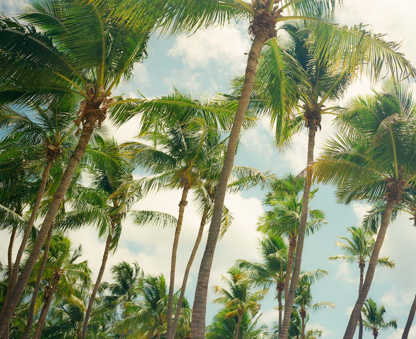 IMAGE OF PALM TREES | TOSCA RADIGONDA PHOTOGRAPHY