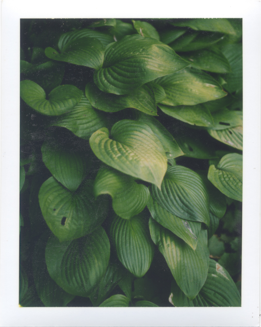 Bluish green colors shot on Polaroid | Photographers who shoot film