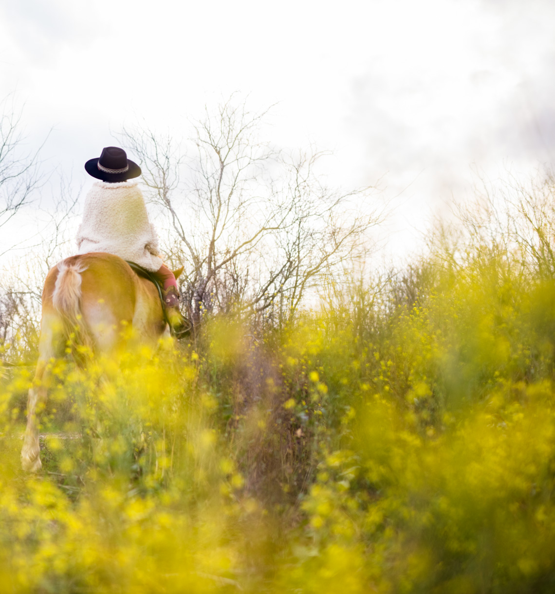 Horseback riding in wildflowers | Visual Storytelling Photographer