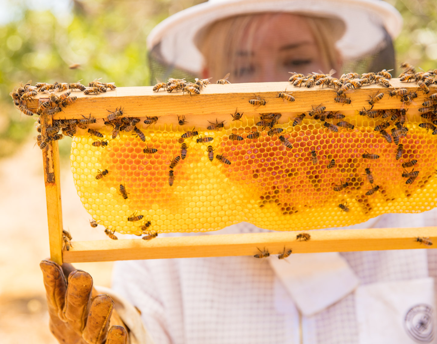 Female beekeeper inspecting hive | Commercial Lifestyle Photographer