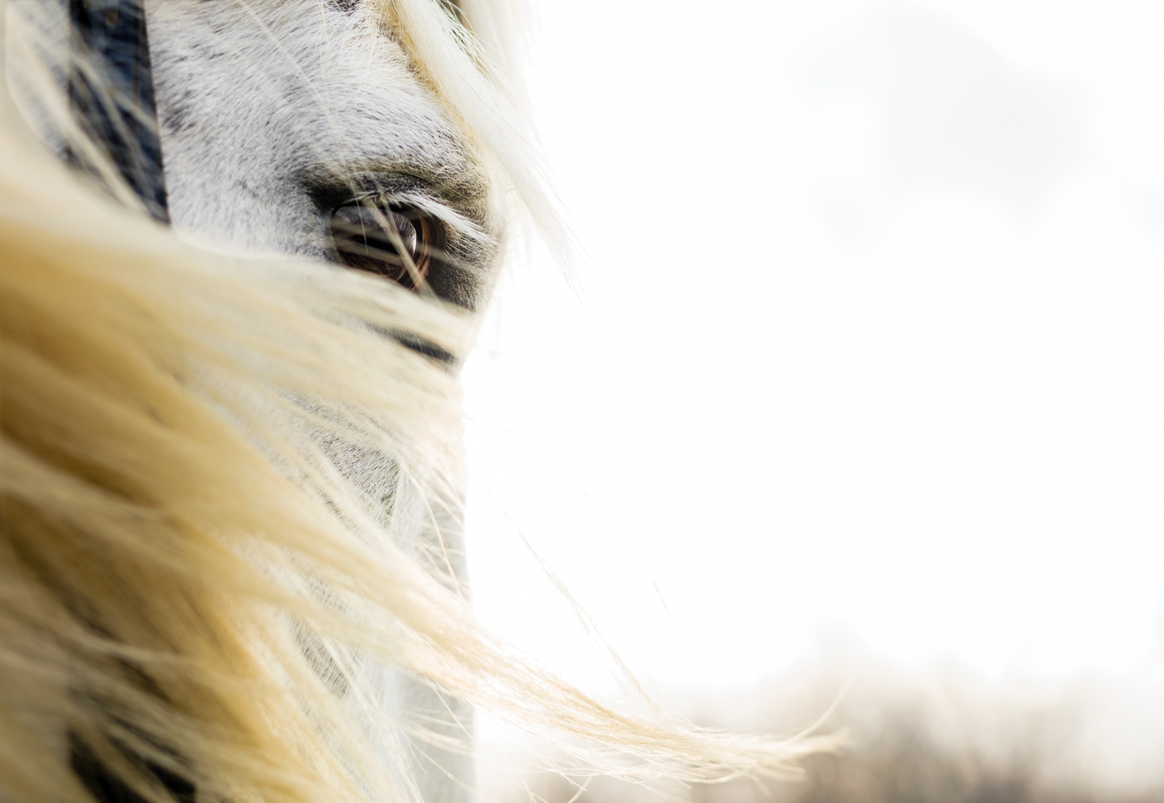 Beautiful white horse |  Fine Art Photographer