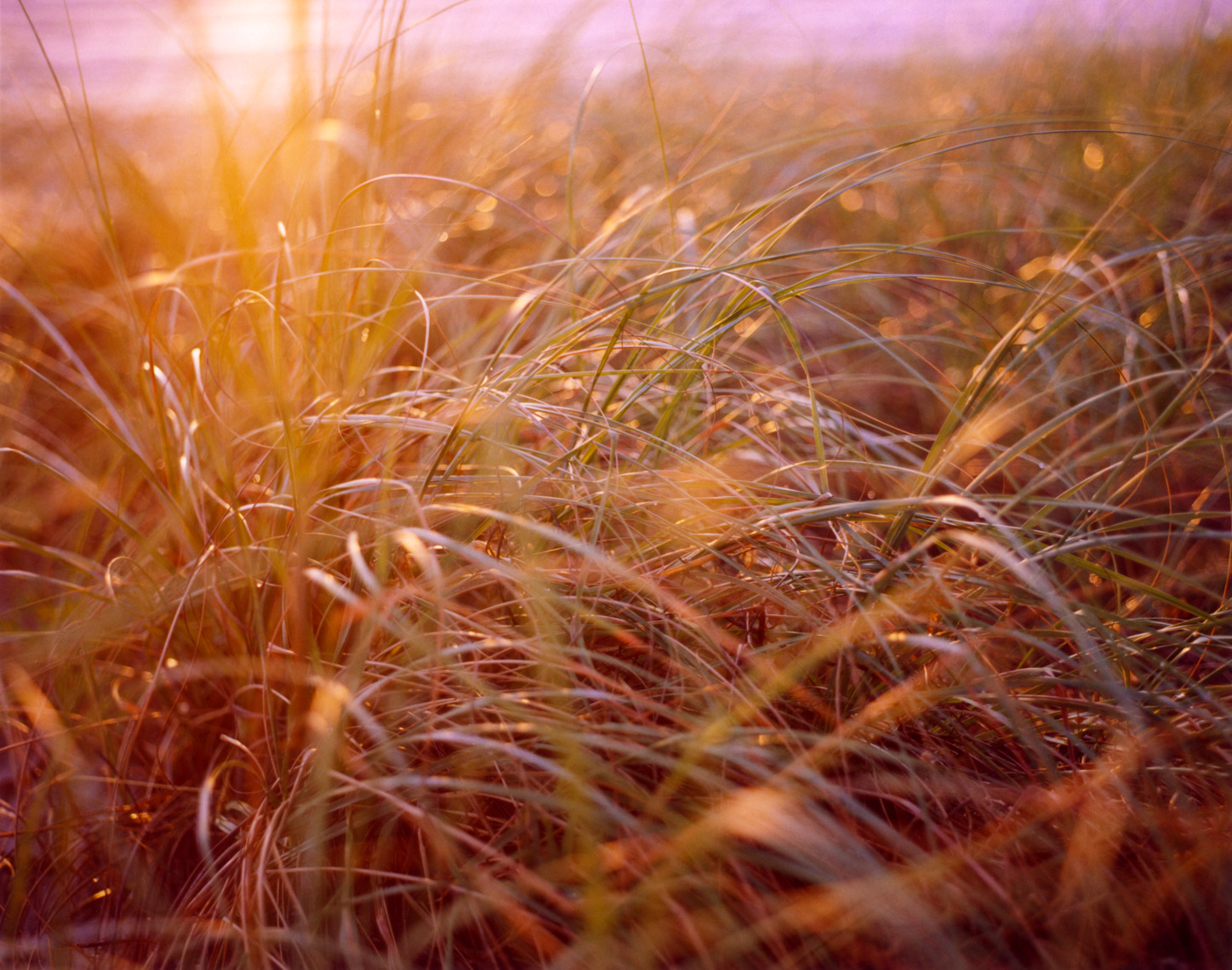 Soft Florida sunrise beach grass | Travel Editorial Photographer