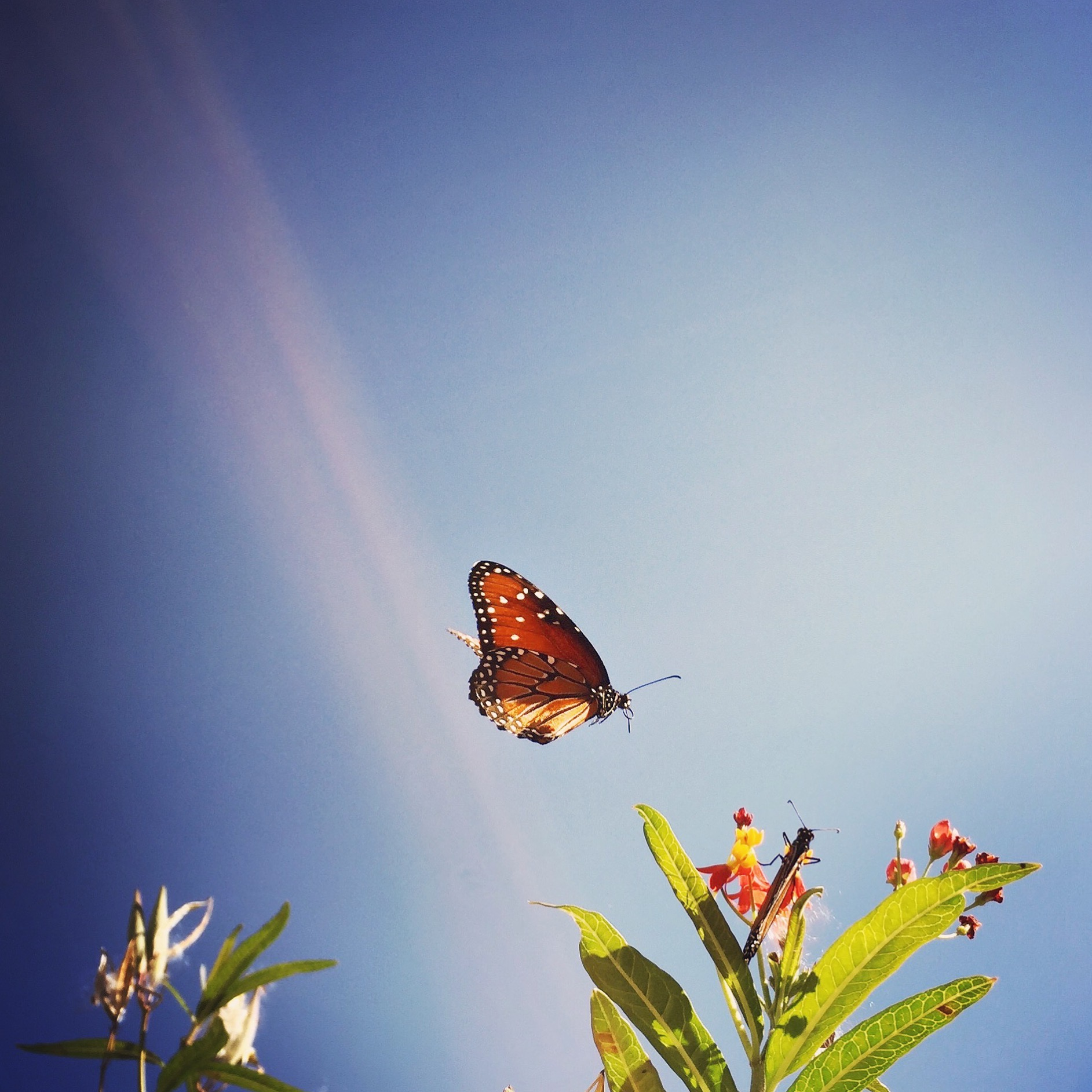 Bright image of butterflies | Austin Fine Art Photographer