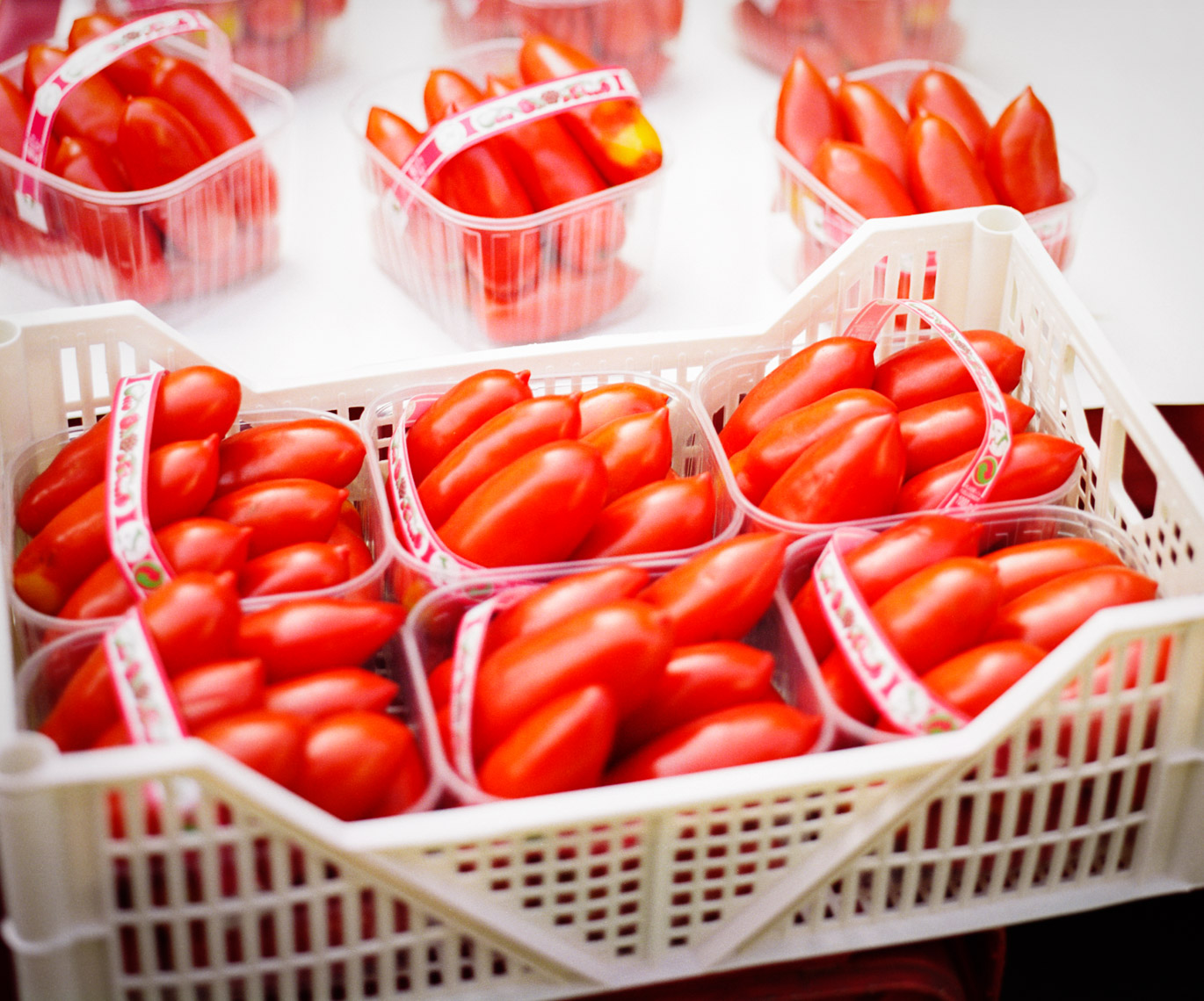 Luscious Red Tomatoes | Visual Storytelling Photographer