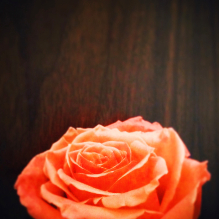 Orange rose on wood surface | Visual Storytelling Photographer