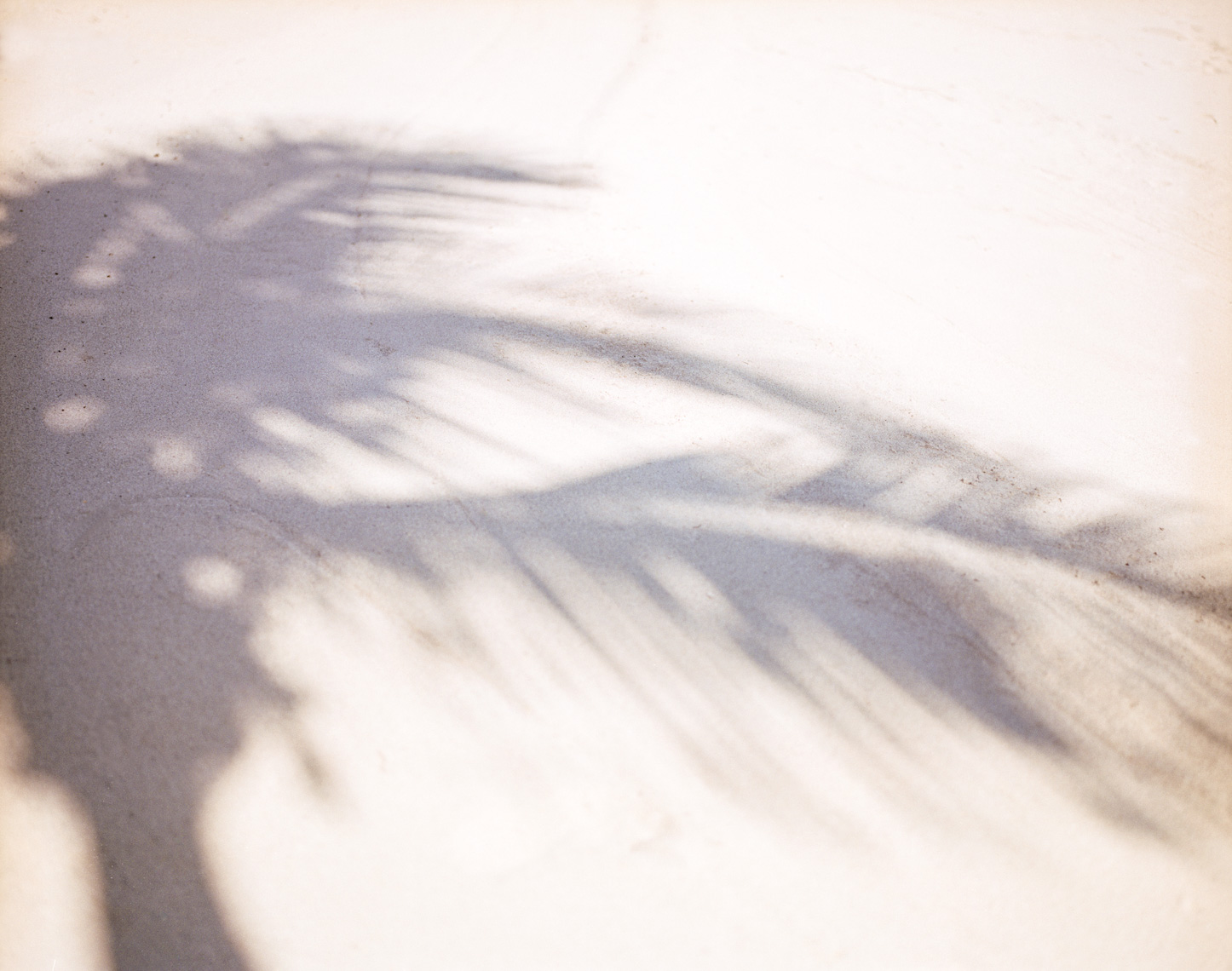 Palm tree sand shadow | Travel Editorial Photographer