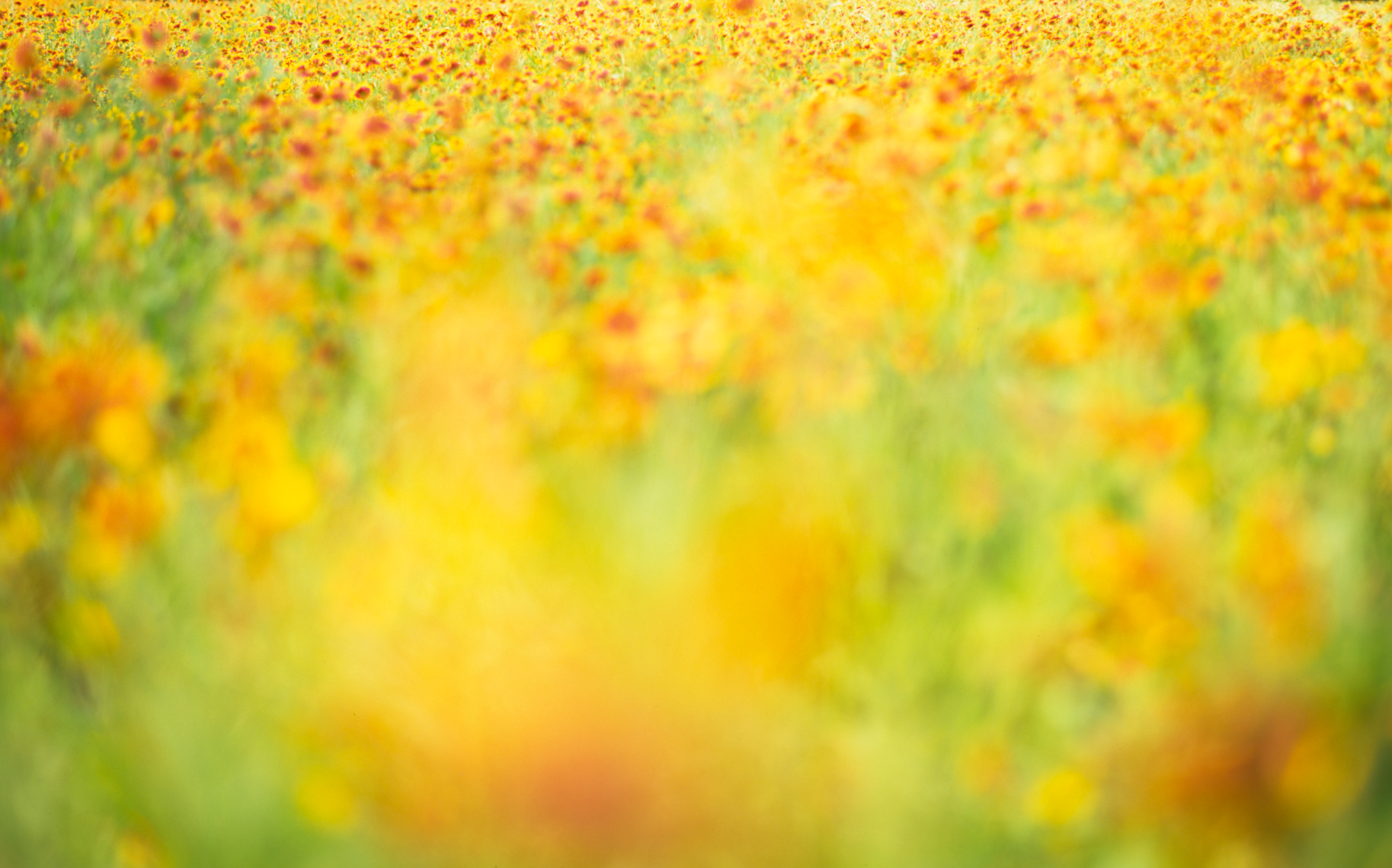 Dreamy Texas wildflower field | Austin Fine Art Photographer