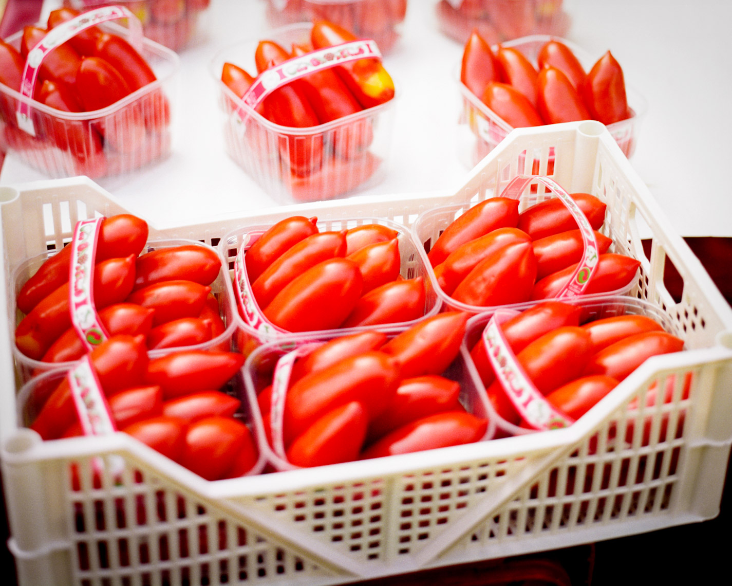 Luscious Red Tomatoes | Tosca Radigonda Photography
