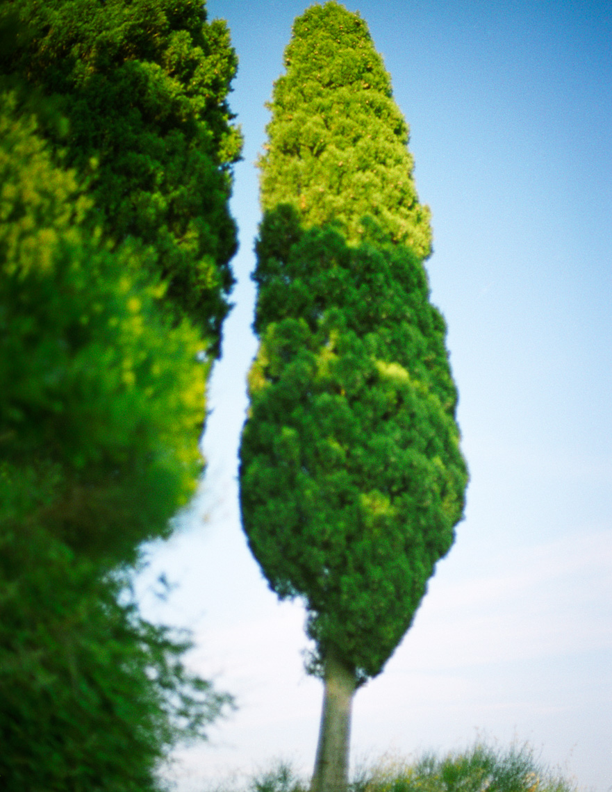 Image of Tuscan Tree | Tosca Radigonda Photography