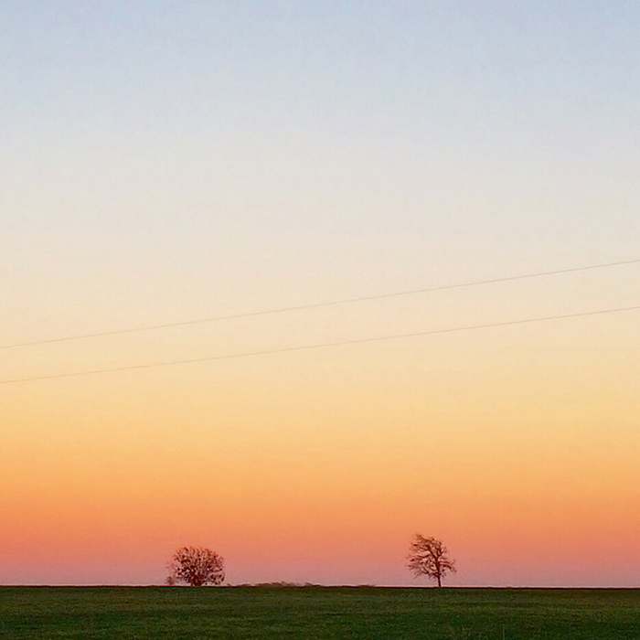 Two Trees At Sunset | Tosca Radigonda Photography