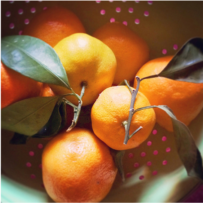 Image of Mandarin Oranges | Tosca Radigonda Photography