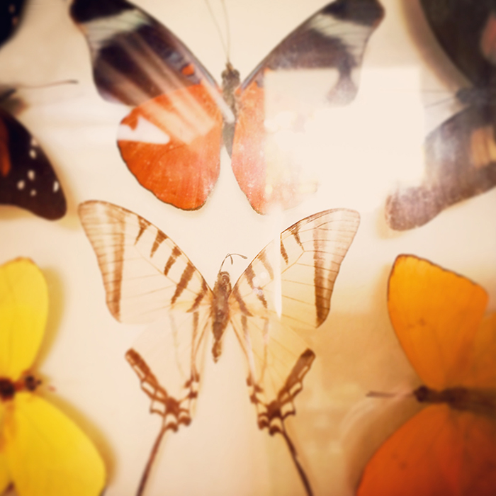 Image of Butterflies | Tosca Radigonda Photography
