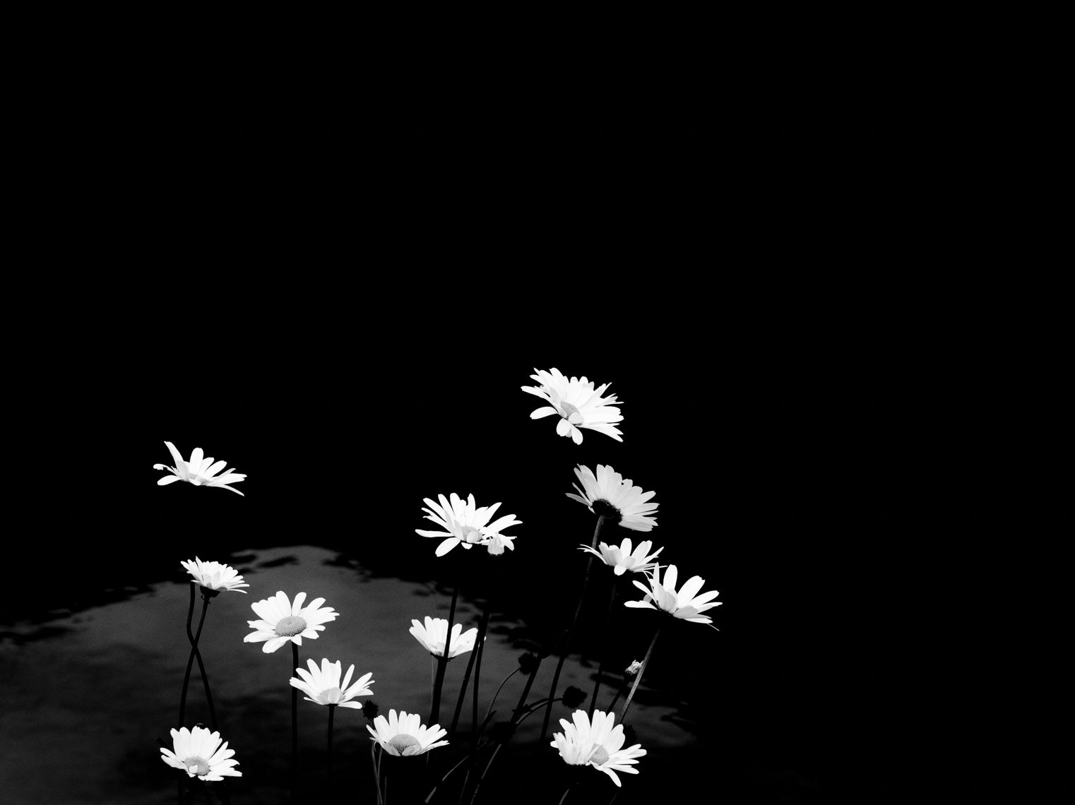 Black And White Image Of Flowers | Tosca Radigonda Photography