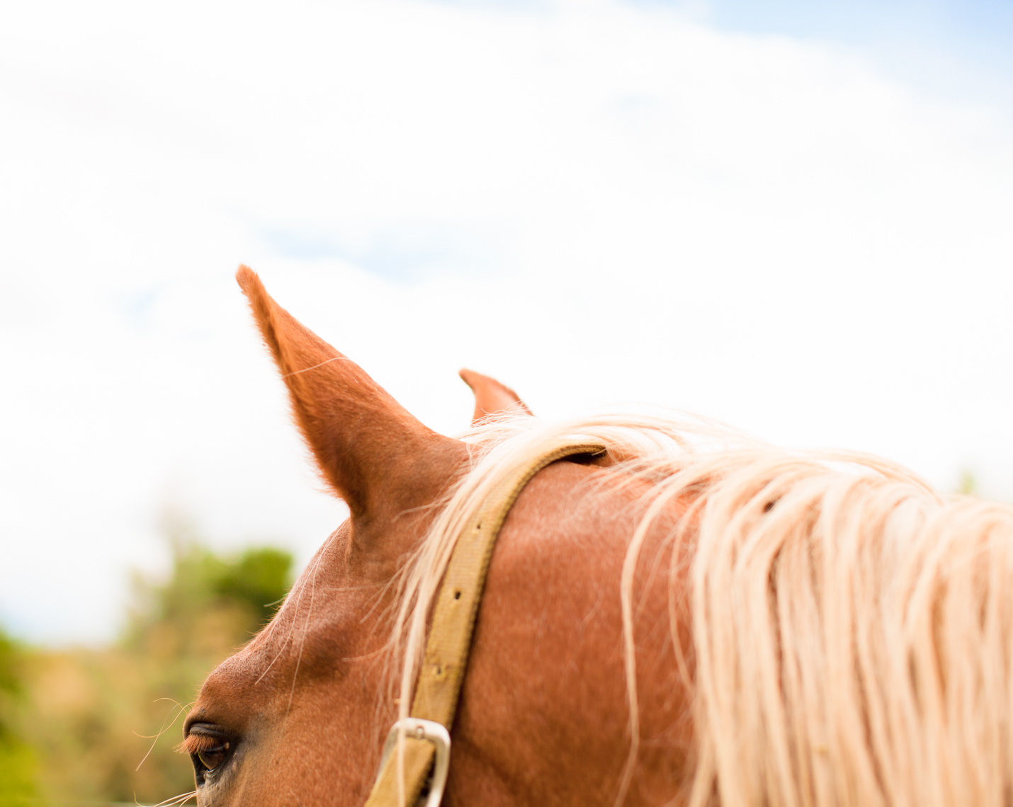 IMAGE OF HORSE WITH BLONDE HAIR | TOSCA RADIGONDA PHOTOGRAPHY